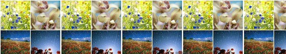 Flower Icons google plus cover