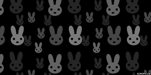 Black And White Rabbits google plus cover