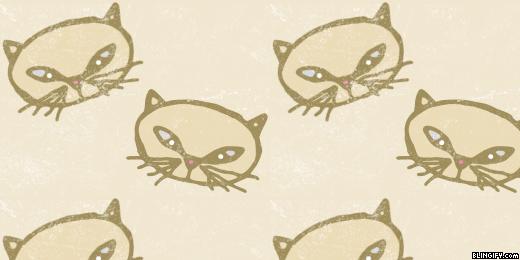 Cats google plus cover