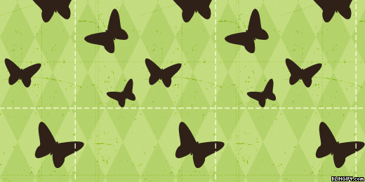 Cute Butterfly google plus cover