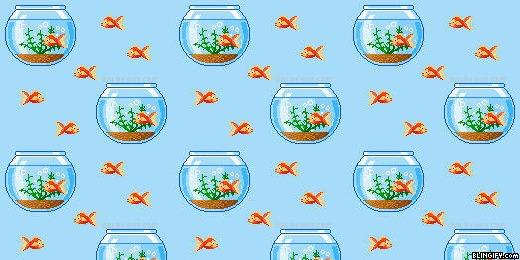Cute Fish Tank google plus cover