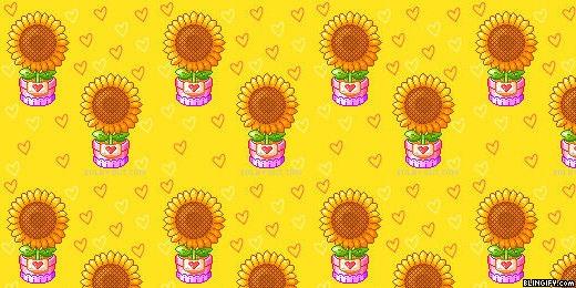 Sun Flowers google plus cover