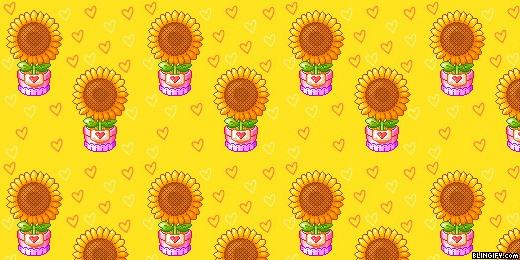 Sunflowers google plus cover
