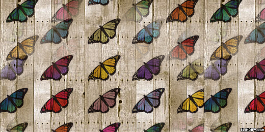 Wood Butterfly google plus cover